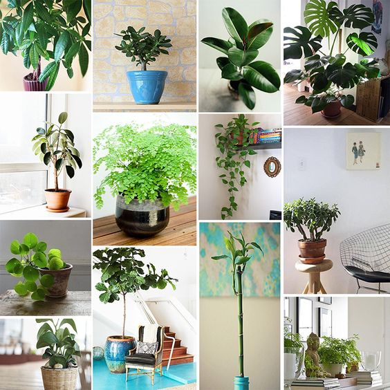 Good Feng Shui plants | Use the bagua to know where to place them in your home | Girlfriend is Better