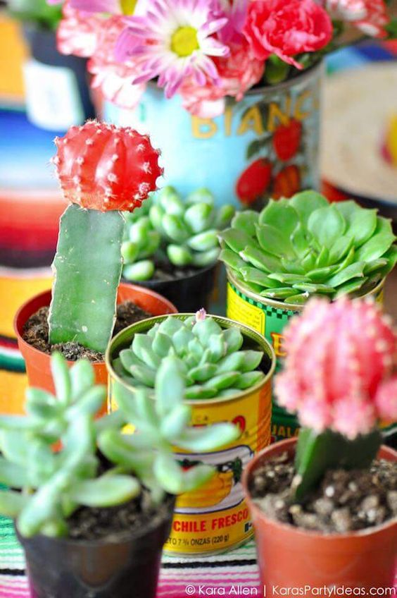 Using succulents as table decor and place settings | Girlfriend is Better