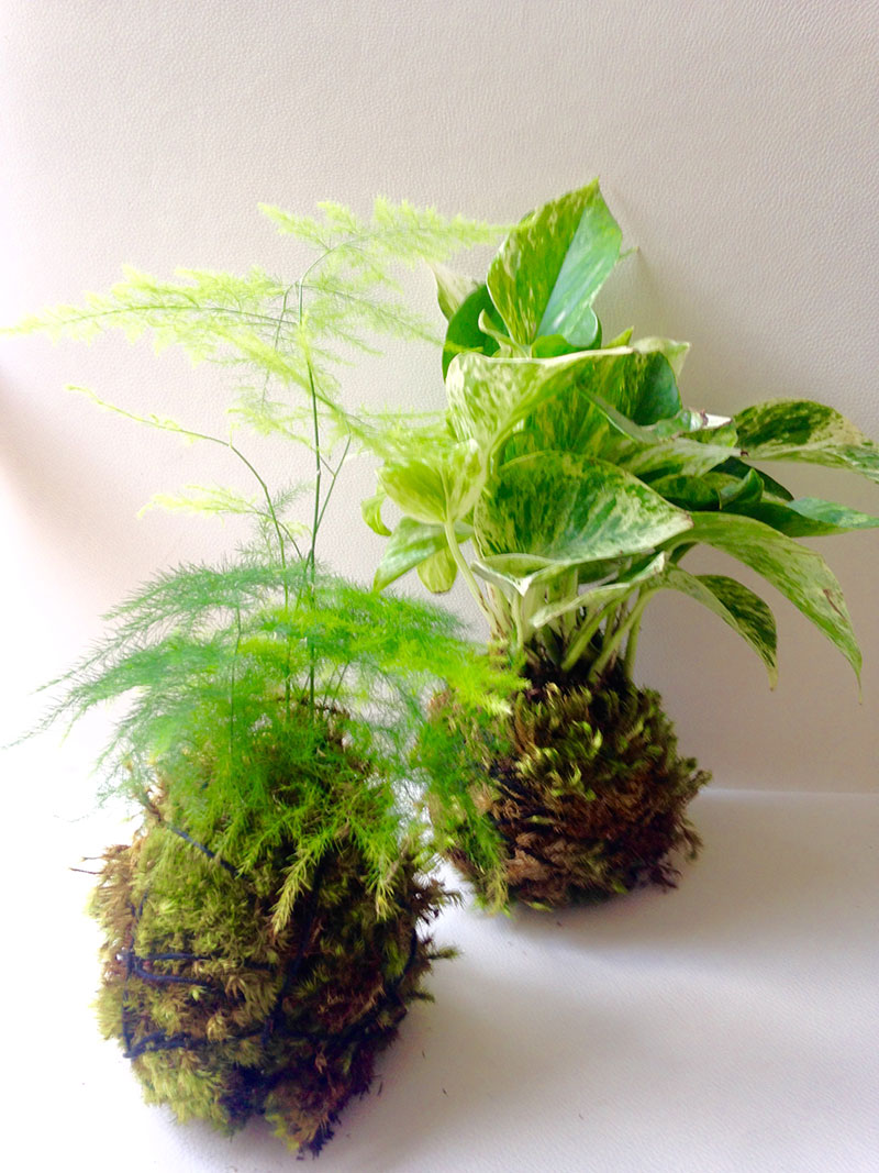 Kokedama moss pots by Bellafloradesign | Girlfriend is Better