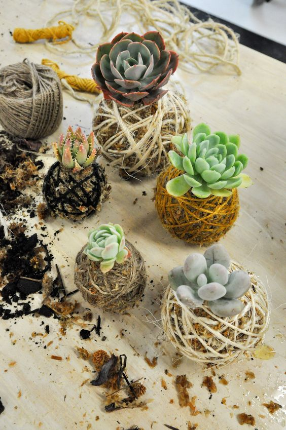 Kokedama succulent moss ball indoor garden DIY | Girlfriend is Better