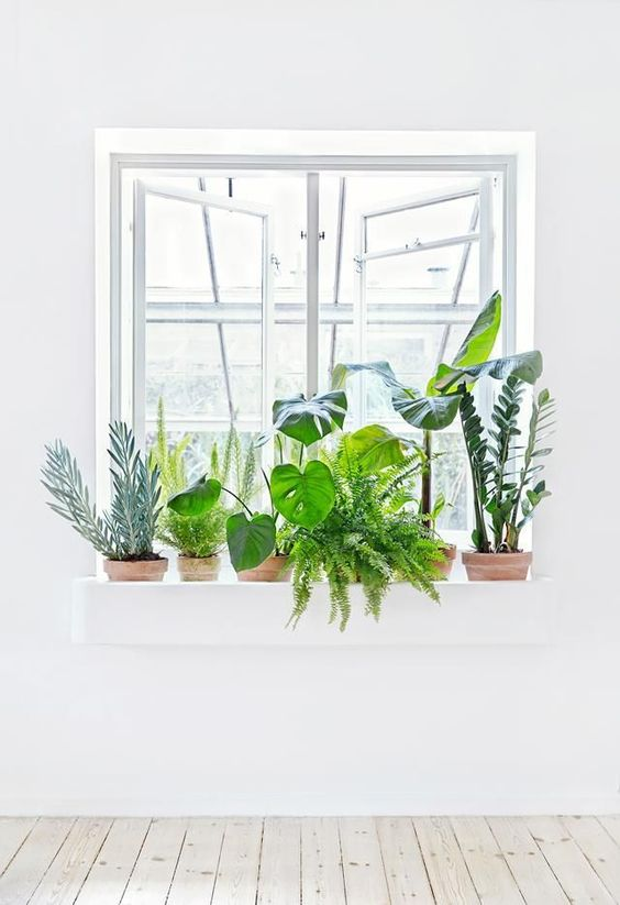 Vibrant healthy plants are best Feng Shui | Girlfriend is Better