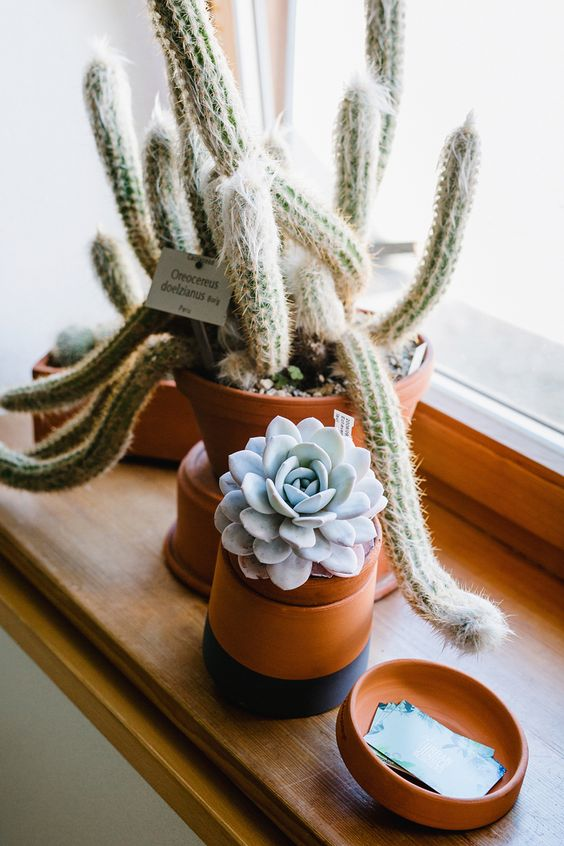 Capricorn astrology home decor guide | succulents in earthy pots | Girlfriend is Better