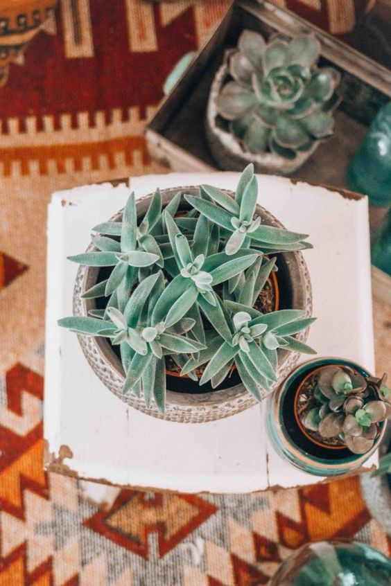 outdoor tablescapes succulents Mexican blanket tablecloth idea | Girlfriend is Better