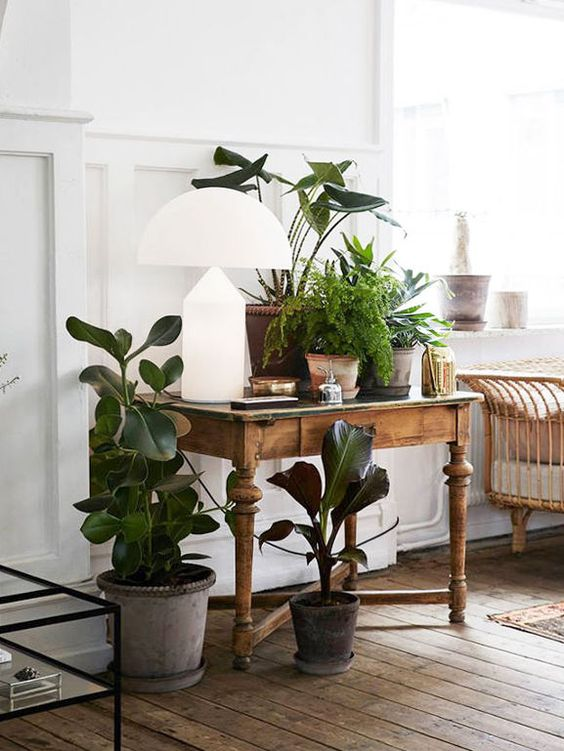 rubber plant | rustic and fresh decor | Girlfriend is Better