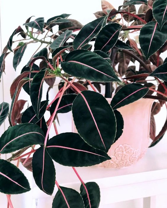 pink plants | Imptiens Velvetea vintage pottery | Girlfriend is Better