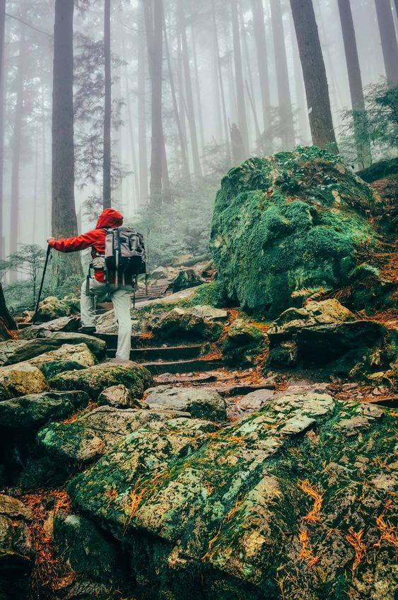 Vancouver BC | hikes ropes Grouse Mountain Ski Resort kid-friendly | Girlfriend is Better