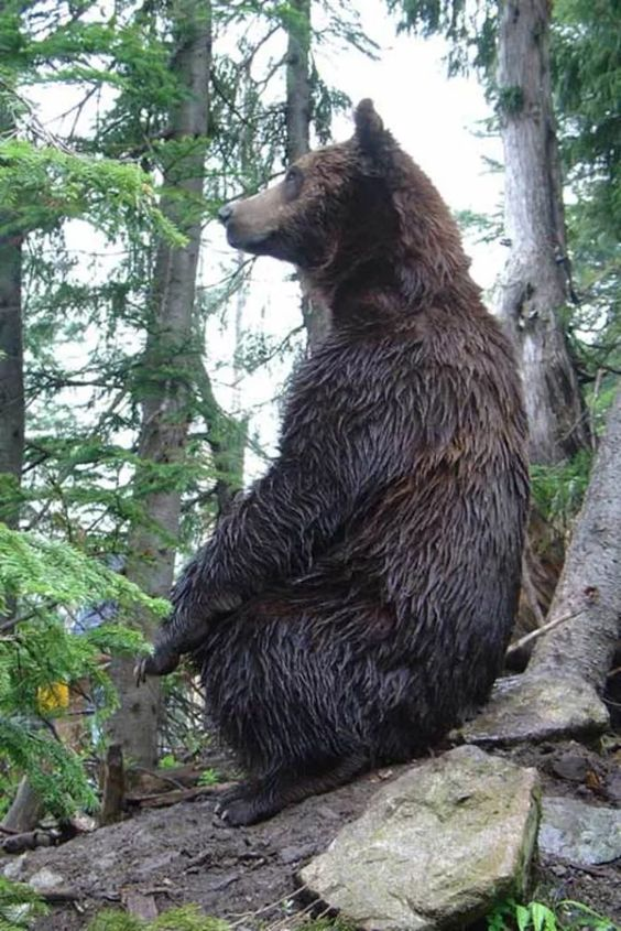 Vancouver BC | bear encounter travel guide tourist tips kid-friendly | Girlfriend is Better